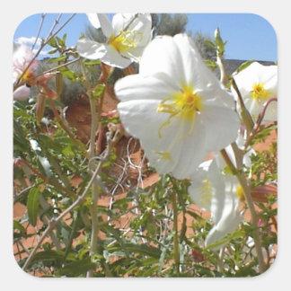 Flor del desierto pegatina cuadradas