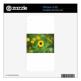 flor del día soleado skins para iPhone 4S
