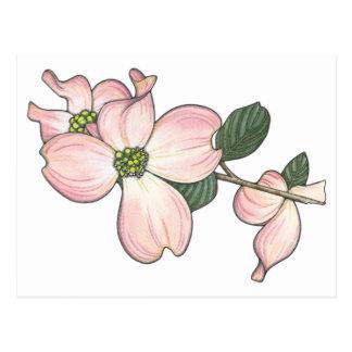 Flor del Dogwood Postal