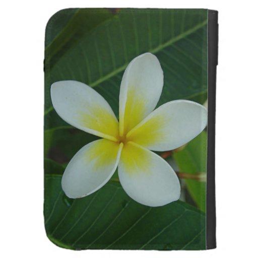 Flor del Frangipani