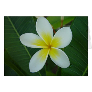Flor del Frangipani Felicitación