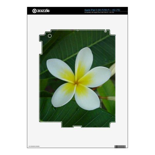 Flor del Frangipani iPad 3 Skins