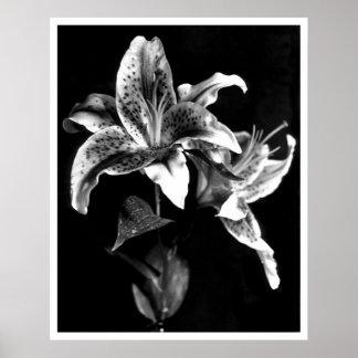 Flor del fuego artificial póster