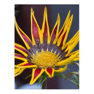 flor del gardenia del garzania en el jardín postal
