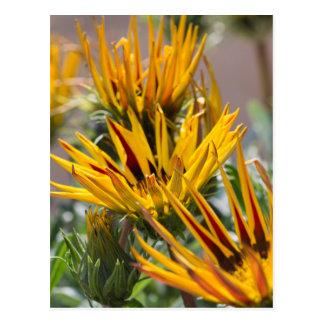 flor del gardenia del garzania en el jardín tarjetas postales