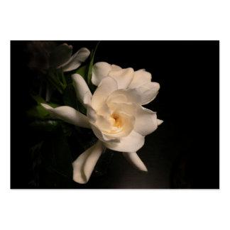 Flor del Gardenia Tarjetas De Visita