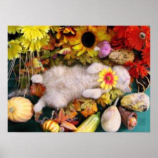 Flor del gato, gato del gatito del Tabby, remiendo Impresiones