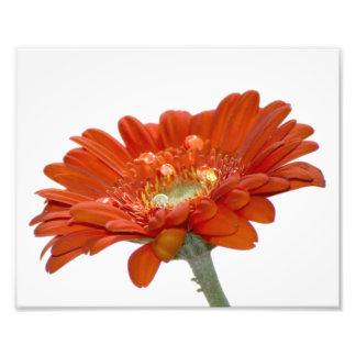Flor del Gerbera de la margarita anaranjada Fotografía