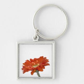 Flor del Gerbera de la margarita anaranjada Llavero Cuadrado Plateado