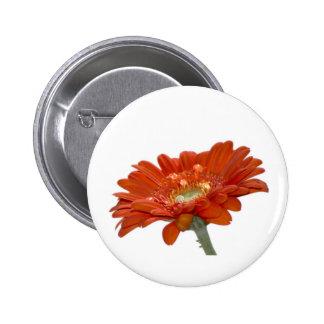 Flor del Gerbera de la margarita anaranjada Pins