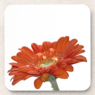 Flor del Gerbera de la margarita anaranjada Posavasos