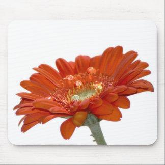 Flor del Gerbera de la margarita anaranjada Tapetes De Ratones