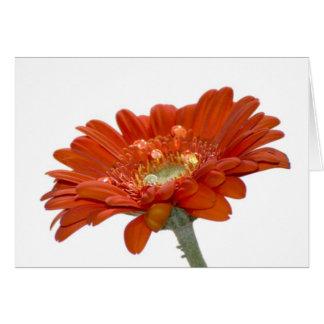 Flor del Gerbera de la margarita anaranjada Tarjeta De Felicitación