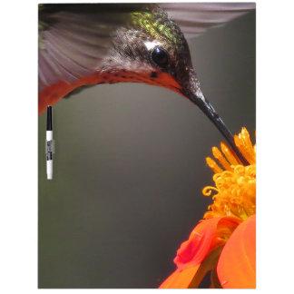 Flor del girasol del pájaro del colibrí floral tableros blancos