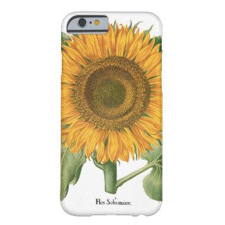Flor del girasol del vintage de Basilius Besler Funda Para iPhone 6 Barely There