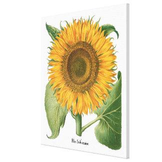 Flor del girasol del vintage de Basilius Besler Impresiones De Lienzo
