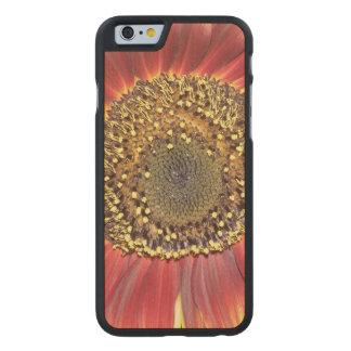 Flor del girasol funda de iPhone 6 carved® slim de arce