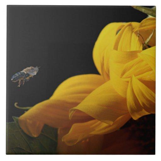 Flor del girasol y teja de la abeja