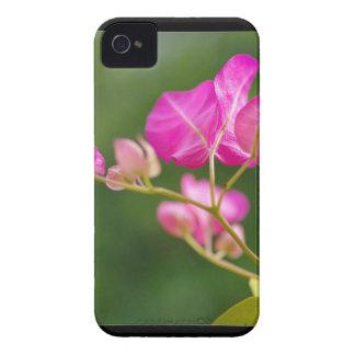 Flor del glabra del Bougainvillea Case-Mate iPhone 4 Protectores