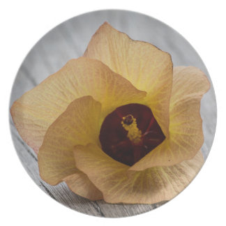 Flor del hibisco del melocotón plato de comida