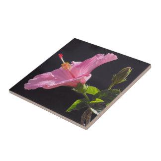 Flor del hibisco en perfil azulejo cuadrado pequeño