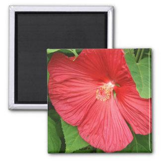 Flor del hibisco imán cuadrado