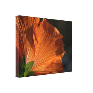 Flor del hibisco impresión en lona estirada