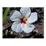 Flor del hibisco postales