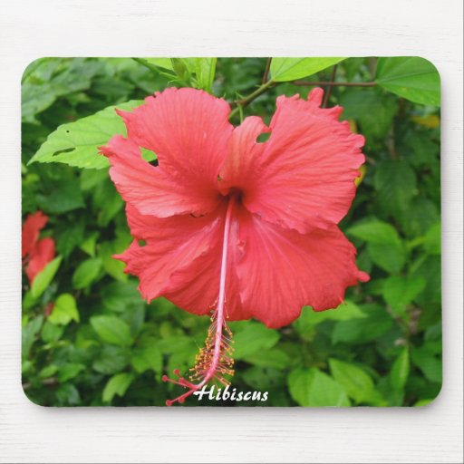 Flor del hibisco tapetes de ratón