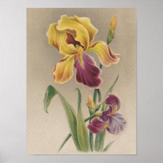 Flor del iris del vintage poster
