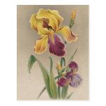 Flor del iris del vintage tarjetas postales