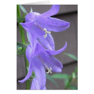 Flor del jardín del Campanula Tarjeta De Felicitación
