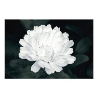 Flor del jardín cojinete
