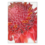Flor del jengibre tarjeta de felicitación