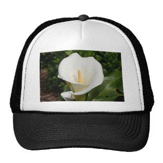 Flor del lirio blanco en la floración gorros
