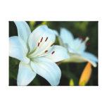 Flor del lirio blanco impresion de lienzo