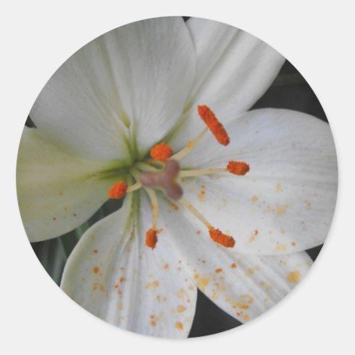 flor del lirio blanco pegatina redonda