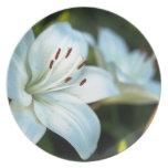 Flor del lirio blanco platos