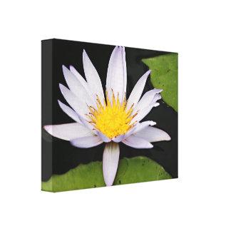 Flor del lirio de agua blanca impresiones en lona estiradas