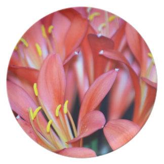 Flor del lirio de Clivia y su origen Platos De Comidas