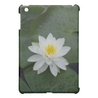 Flor del lirio en cojines de lirio