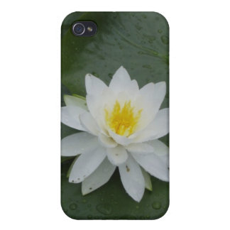 Flor del lirio en cojines de lirio iPhone 4 carcasas