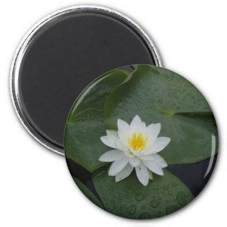 Flor del lirio en cojines de lirio imanes de nevera
