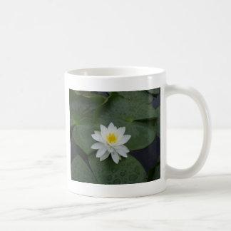 Flor del lirio en cojines de lirio tazas