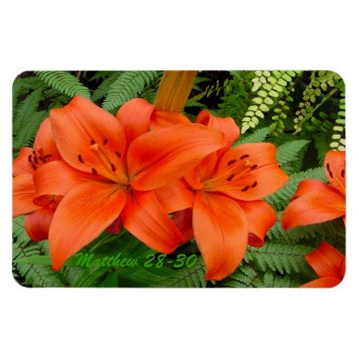 Flor del lirio - naranja iridiscente (Matt 28-30) Iman Rectangular