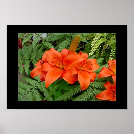Flor del lirio - naranja iridiscente (Matt 28-30) Póster