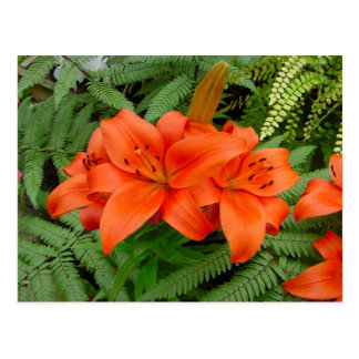 Flor del lirio - naranja iridiscente (Matt 28-30) Tarjeta Postal