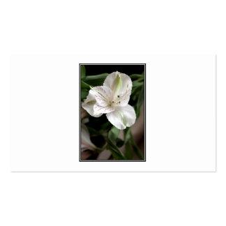 Flor del lirio tarjetas de visita
