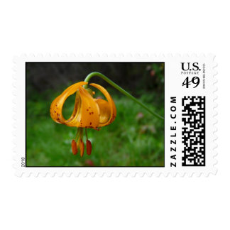 Flor del lirio tigrado del naranja salvaje timbre postal