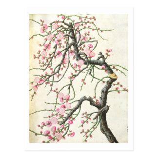 Flor del melocotón (color en el papel) tarjetas postales